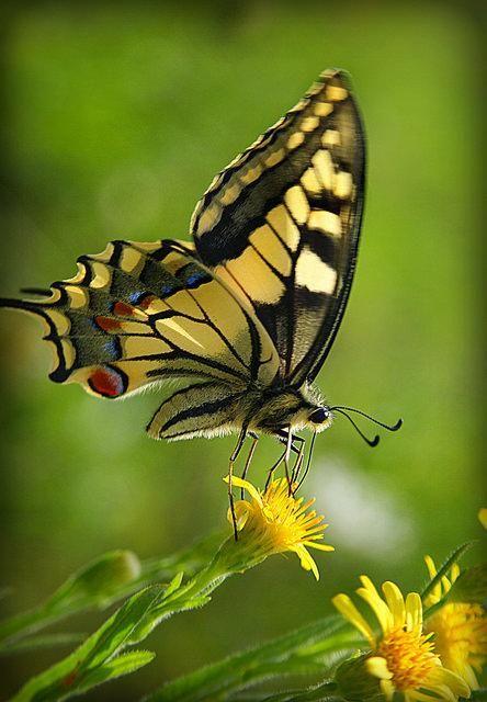 Marie On Farfalle Animali Natura