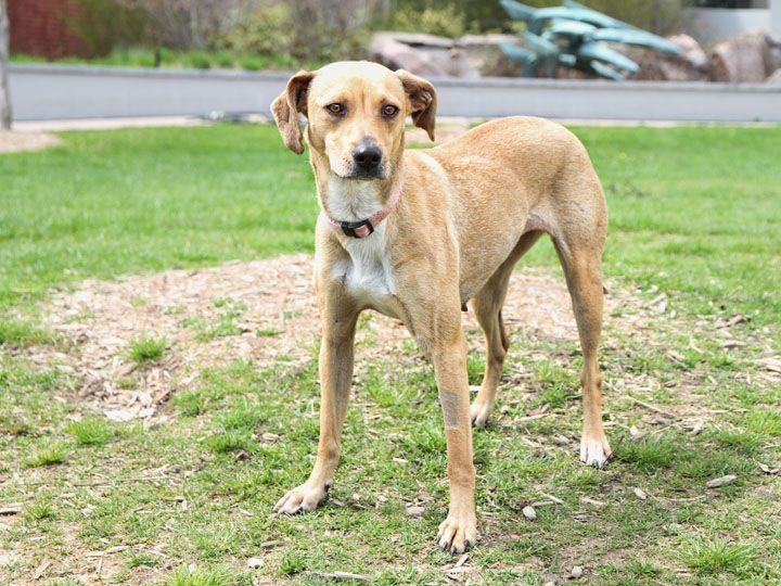 Sunny Beagle Whippet Mix Whippet Mix Whippet Doggy