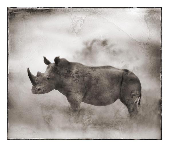 Nick Brandt Creative Wildlife Photography White Rhino