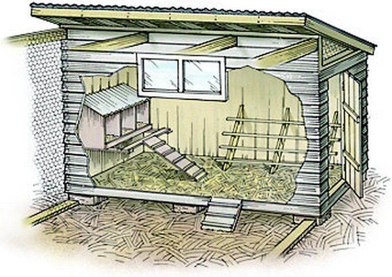 Have A Chicken Coop Up In 24 Hours Chickens Backyard Diy