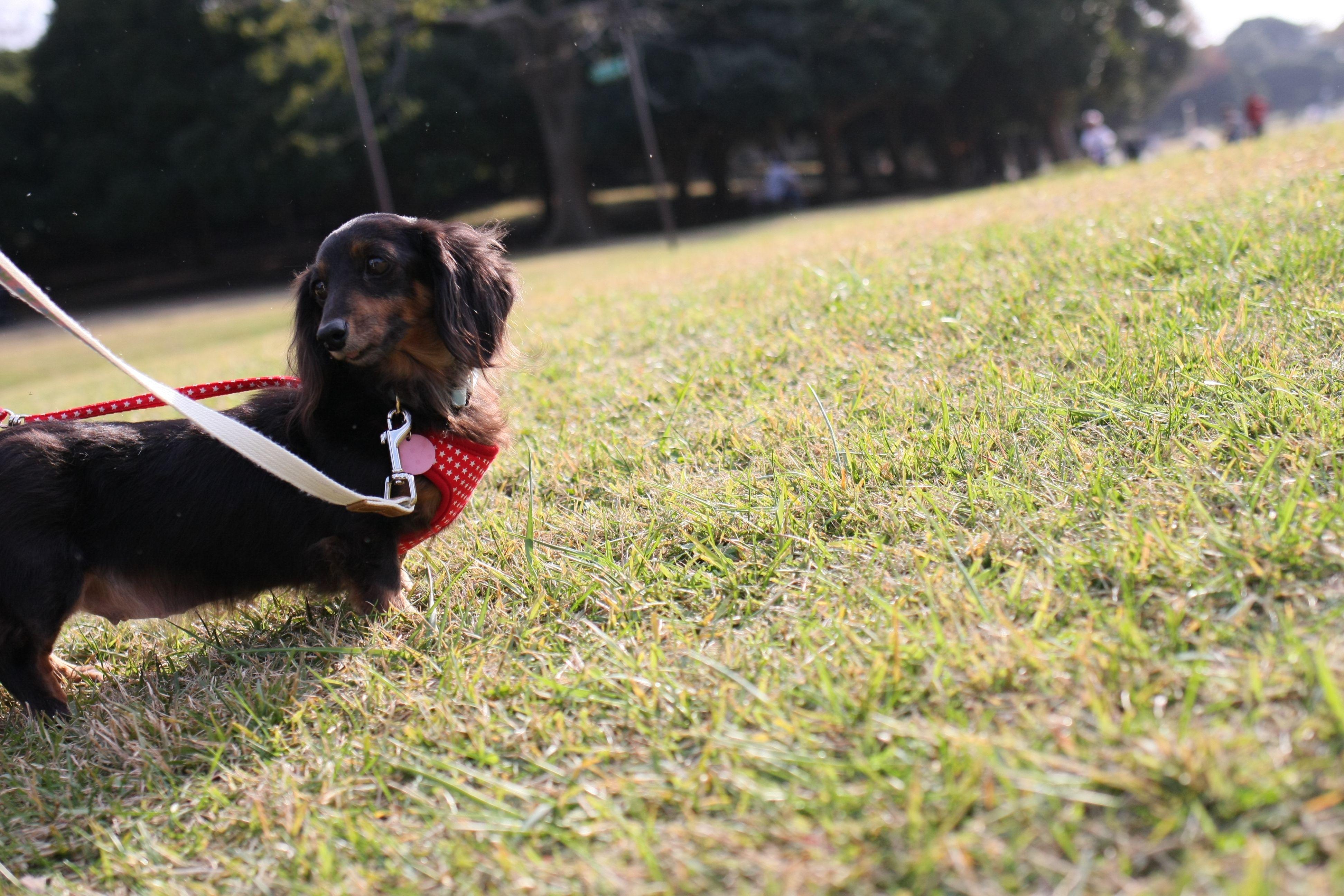 ここは高原 根岸森林公園 横浜市 犬 公園 犬 散歩