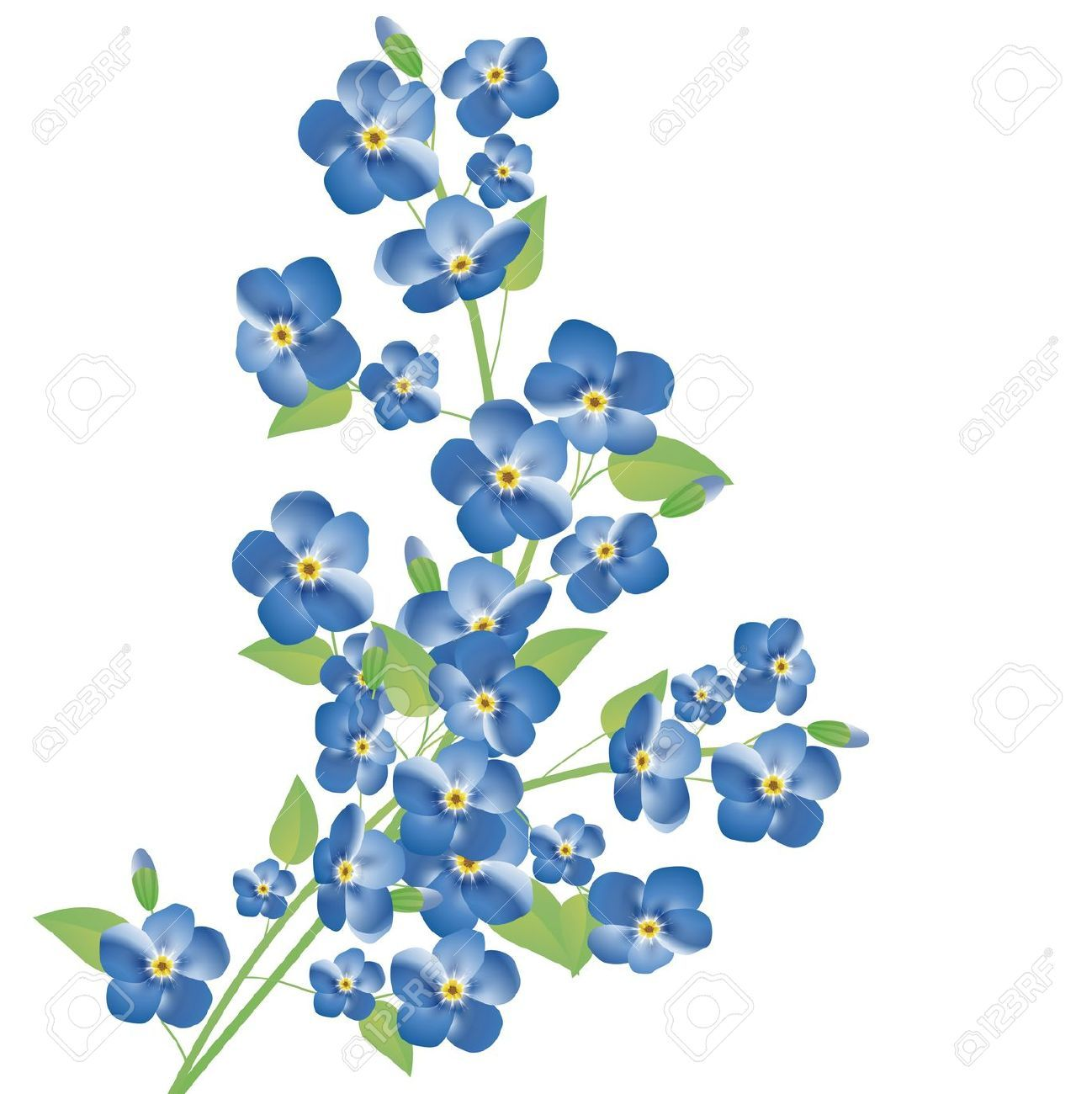 Forget Me Not Stock Illustrations, Cliparts And Royalty Free ...