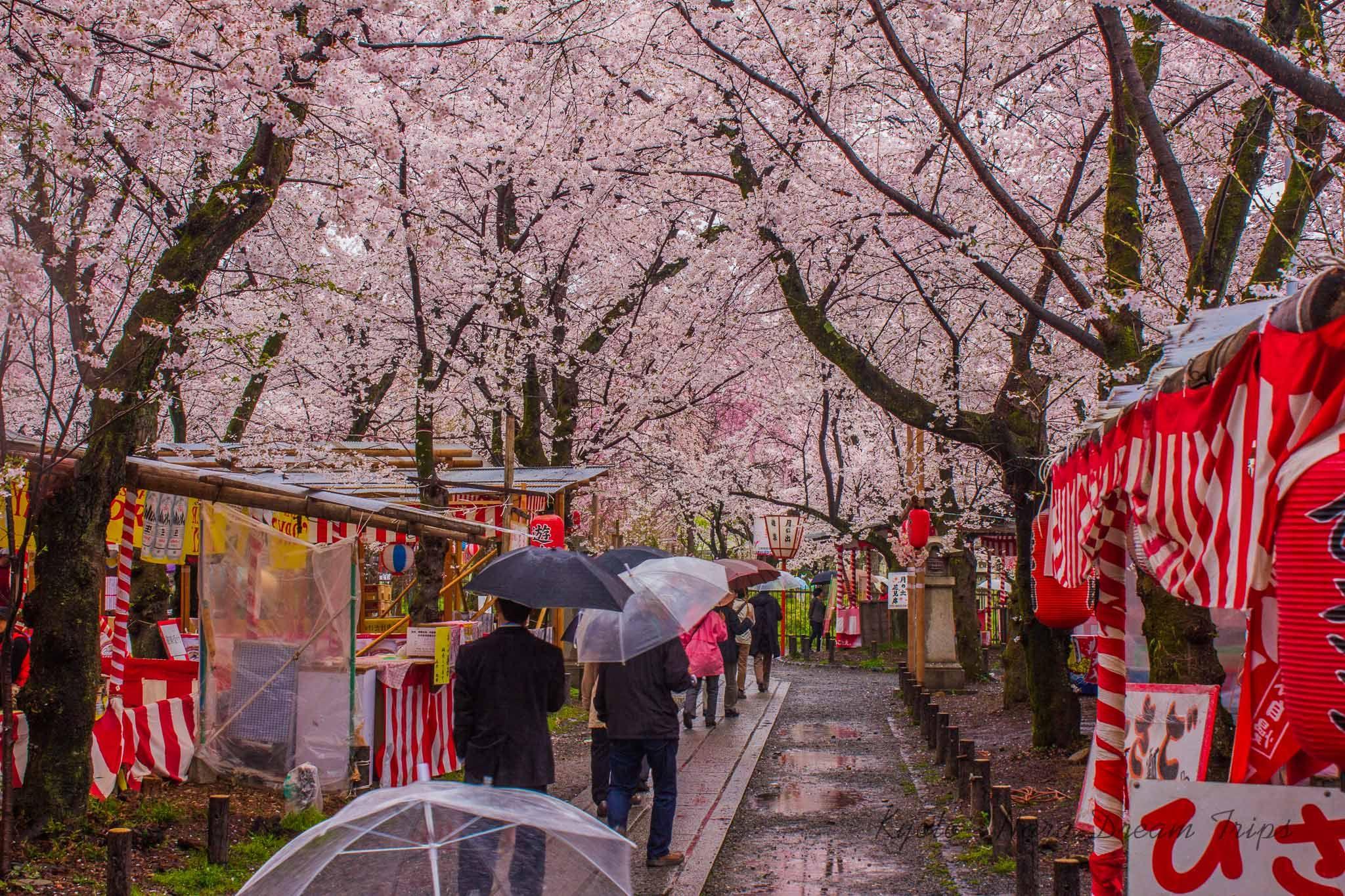 Hirano Jinja In Kyoto Sakura Paradise In 2021 Kamo Shrine Jinja Kyoto
