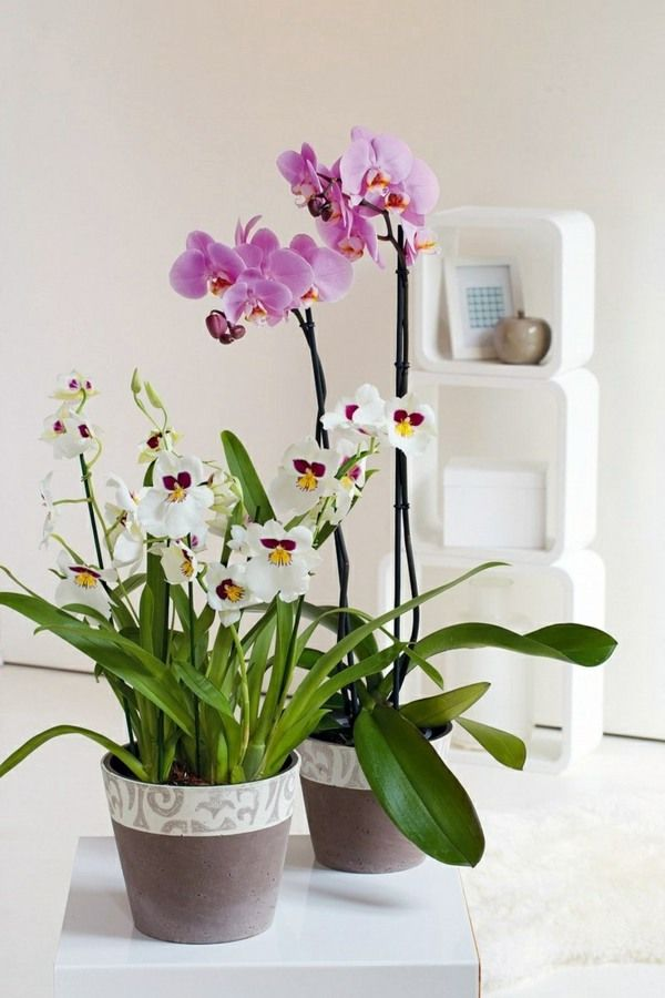 10+ Top Plants In Living Room Feng Shui