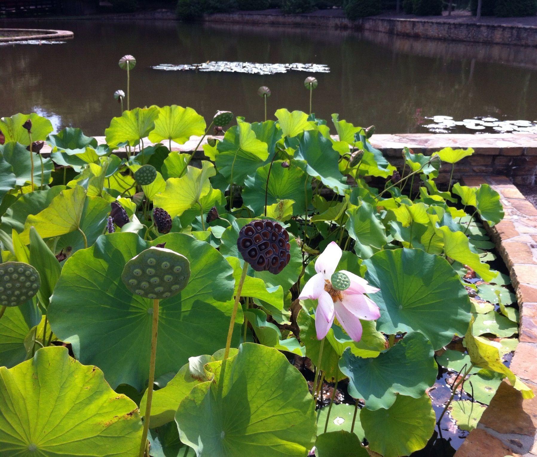 water garden at foxhall resort and sporting club, douglasville, ga