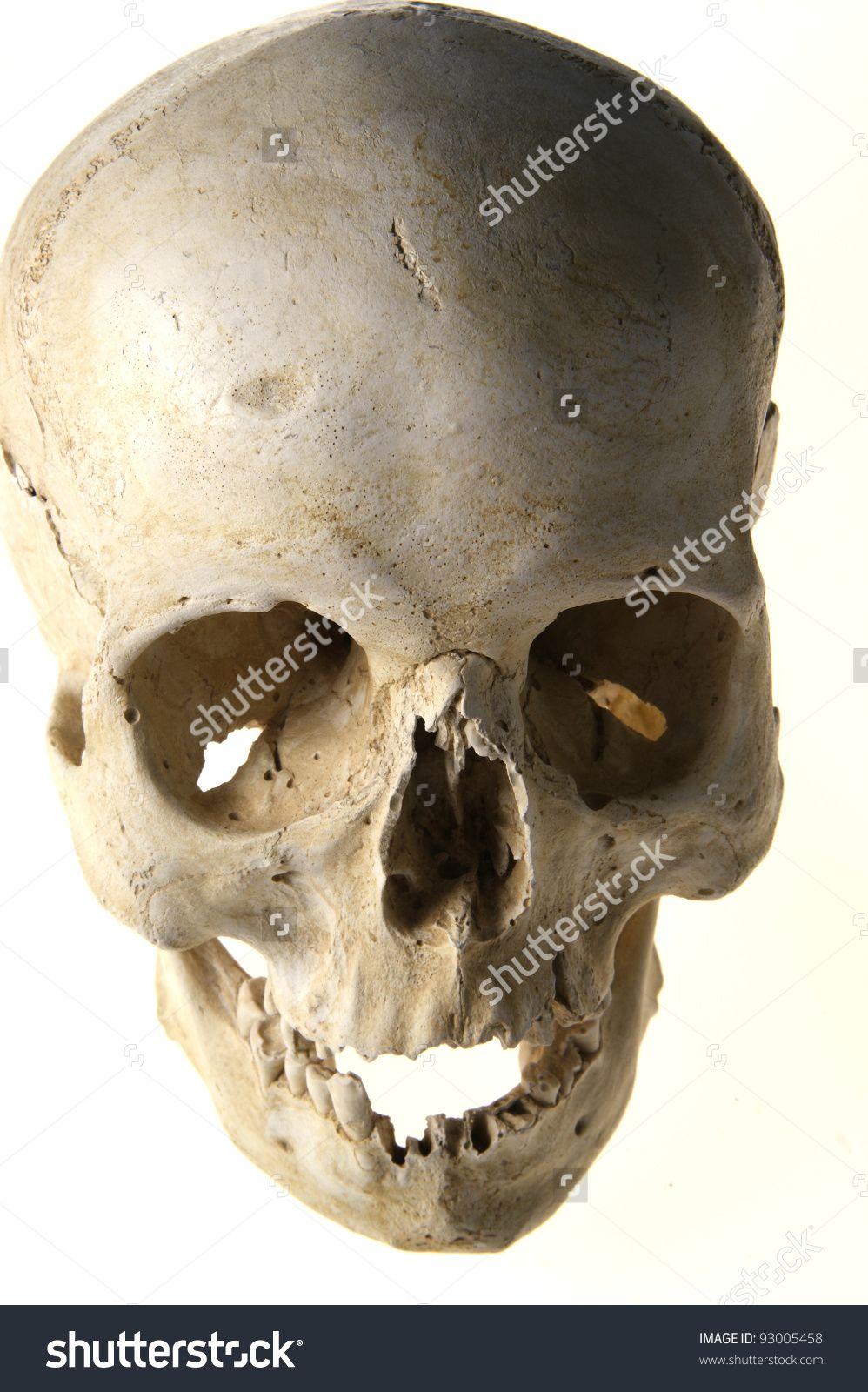 Human Anatomy Skull Стоковые фотографии 93005458 : Shutterstock ...