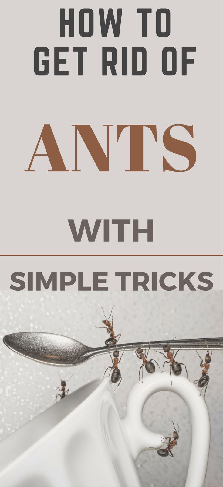 How to Get Rid of Ants In The Kitchen With Simple Tricks | Ant ...
