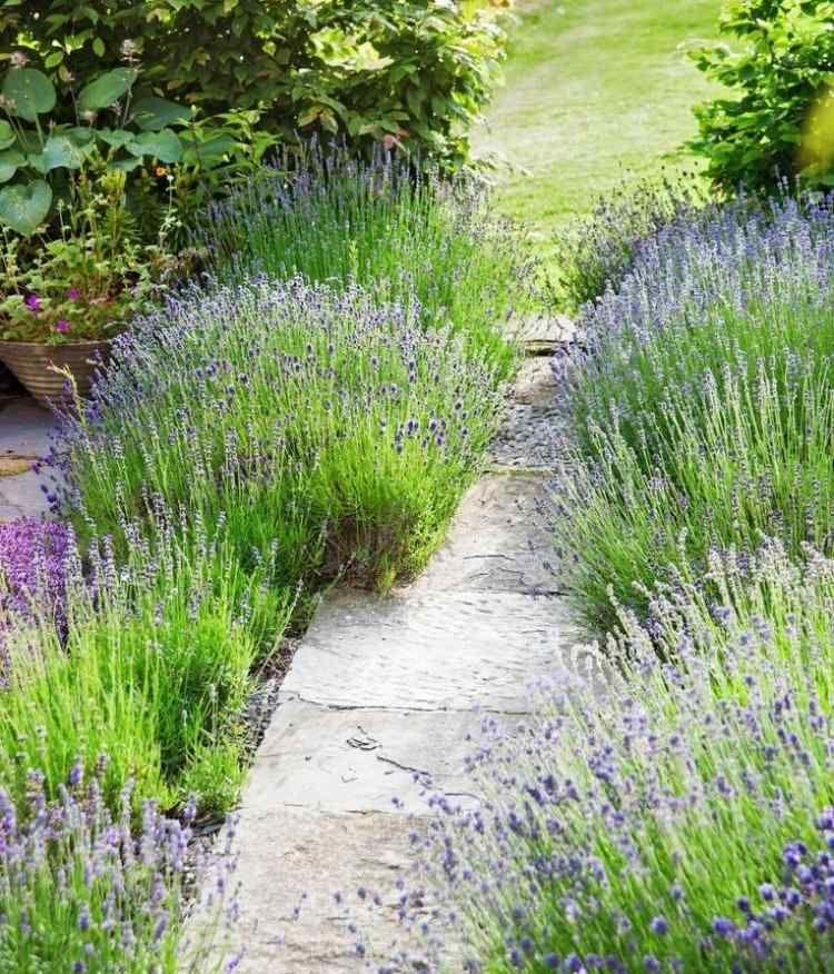 Pflanzen kiesbeet lavendel straucher gehweg kiesbeet - Gartenpflanzen straucher ...