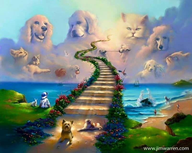 Idea by julie johnson on cute animals rainbow bridge