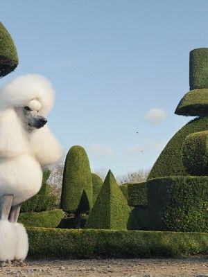 topiary garden and dog
