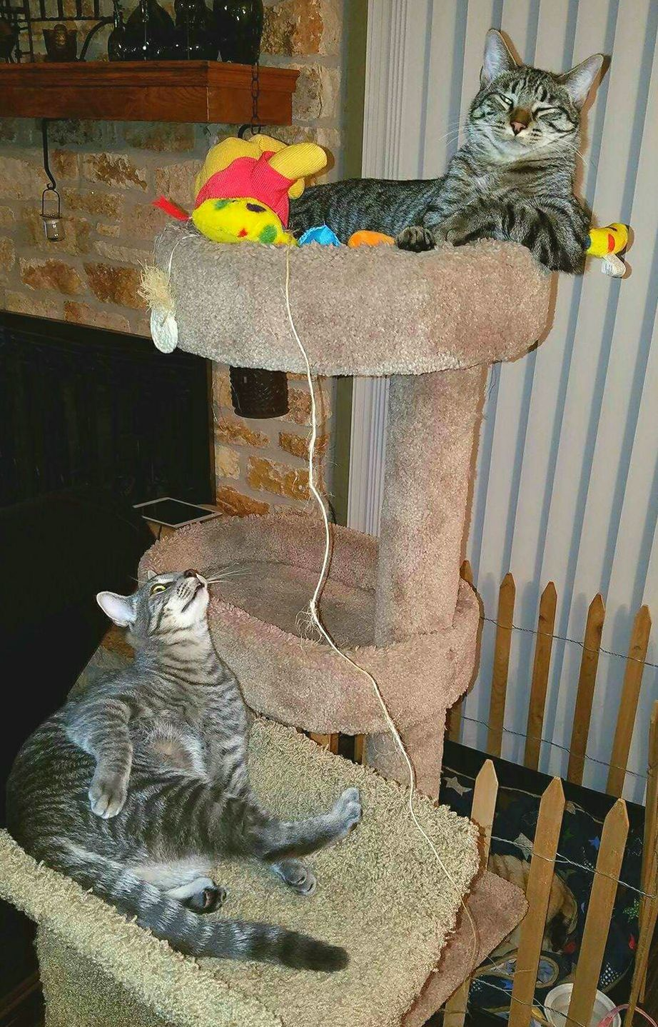 Big brother has all the toys - http://cutecatshq.com/cats/big-brother-has-all-the-toys/