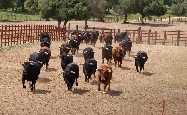Jerez Y El Mundo Del Toro Guías De Viaje Guiasviajesa Com Toros Toros Bravos Guia De Viaje