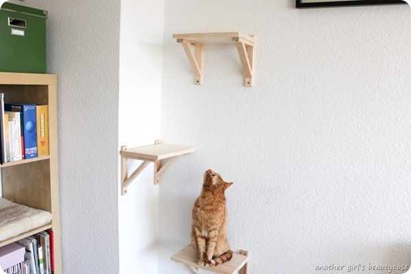 Bilderleiste Weiß Ikea Diy Catwalk Katzentreppe Cat Furniture Ikea Hackers