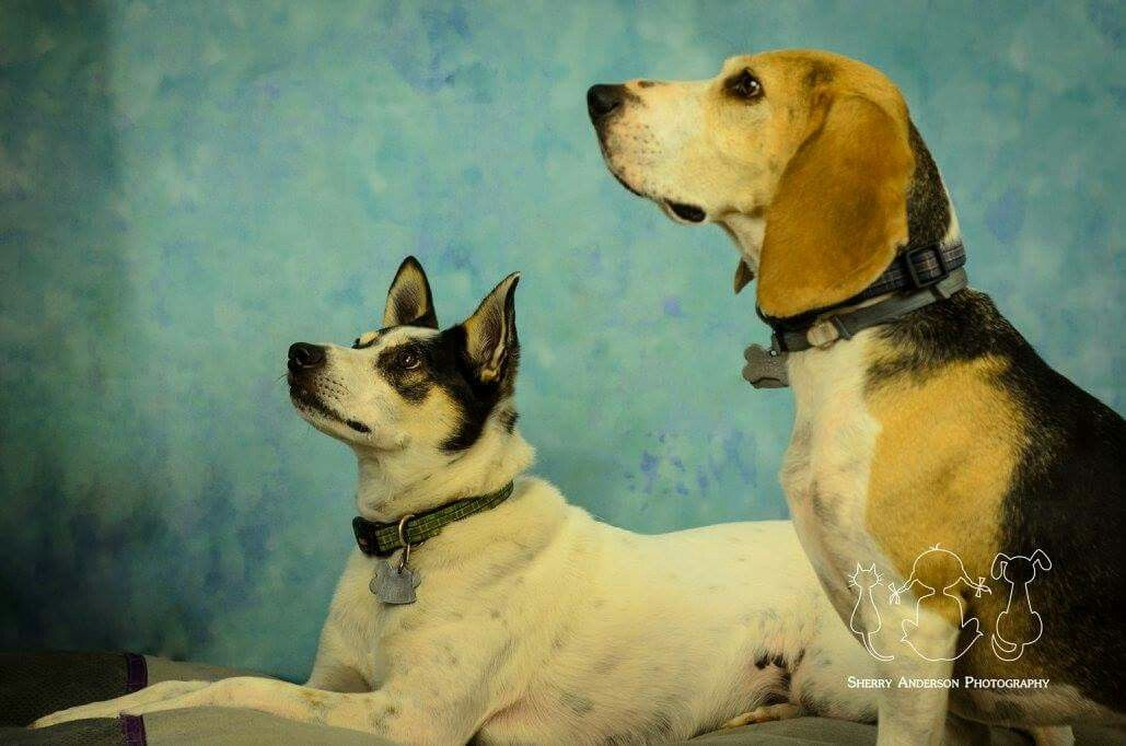 Portrait of Buddy & Cooper. Book your session today at www