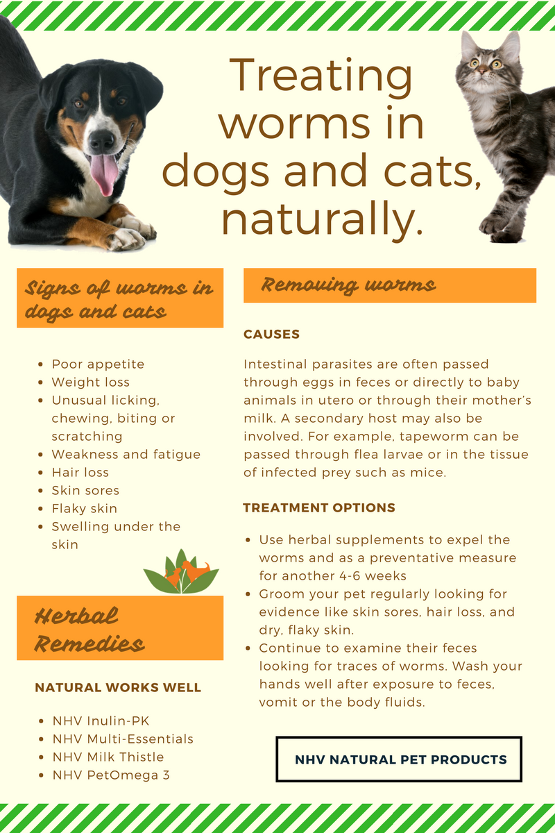 Deworming Dogs and Cats Worms in dogs, Cat dewormer, Dog cat