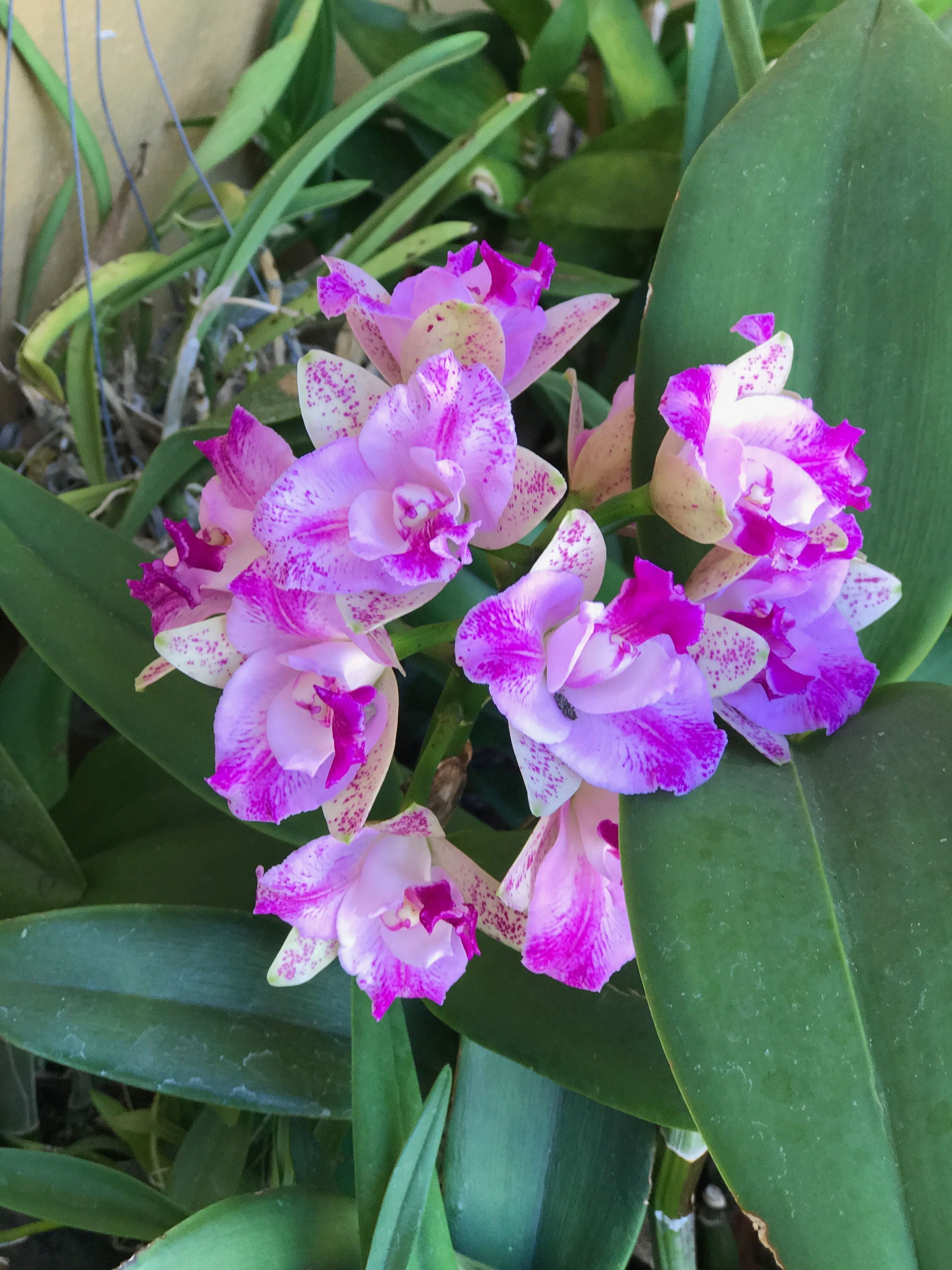 Orchid flowers pinterest orchid flowers and beautiful flowers