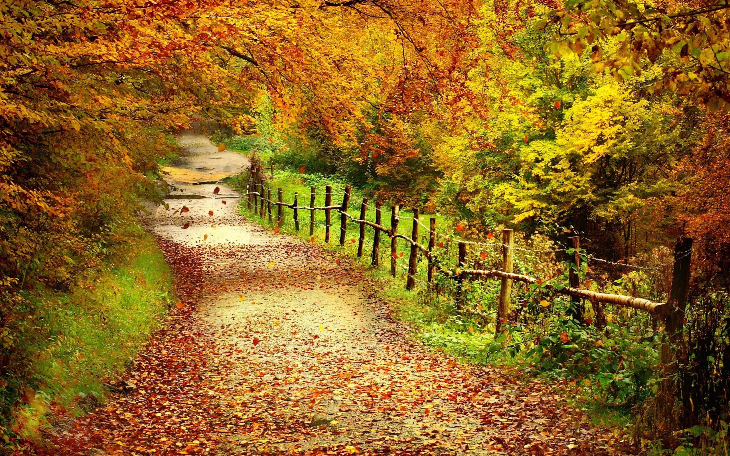 Beau Paysage D'automne, Les Arbres, Les Feuilles Jaunes