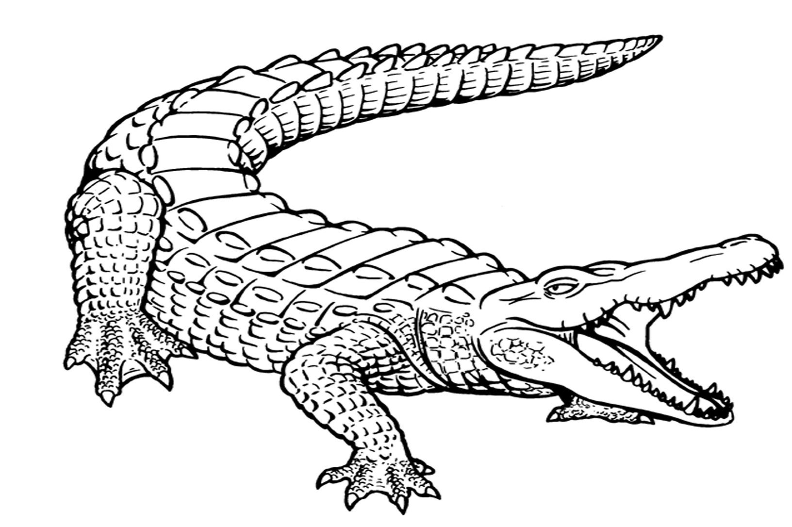 Free Printable Alligator Coloring