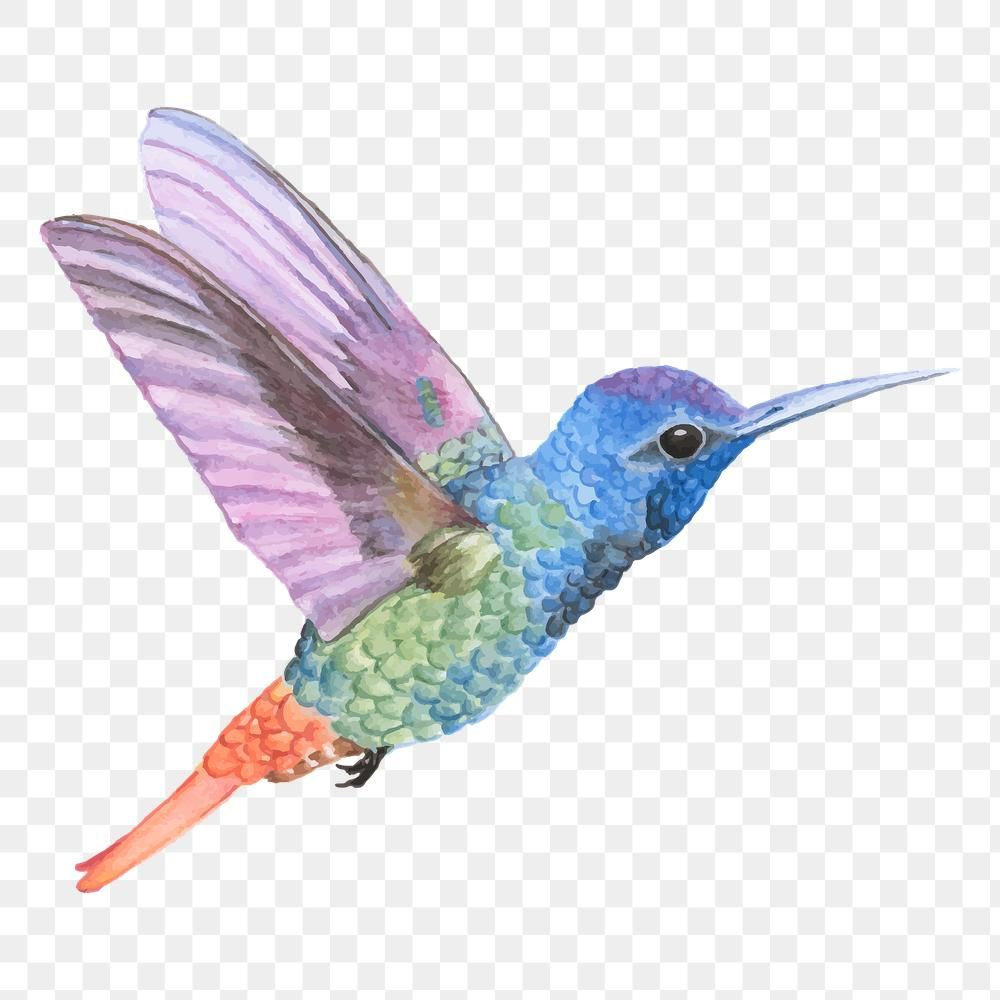 Hand Drawn Hummingbird Transparent Png Premium Image By Rawpixel Com Aum How To Draw Hands Png Free Illustrations