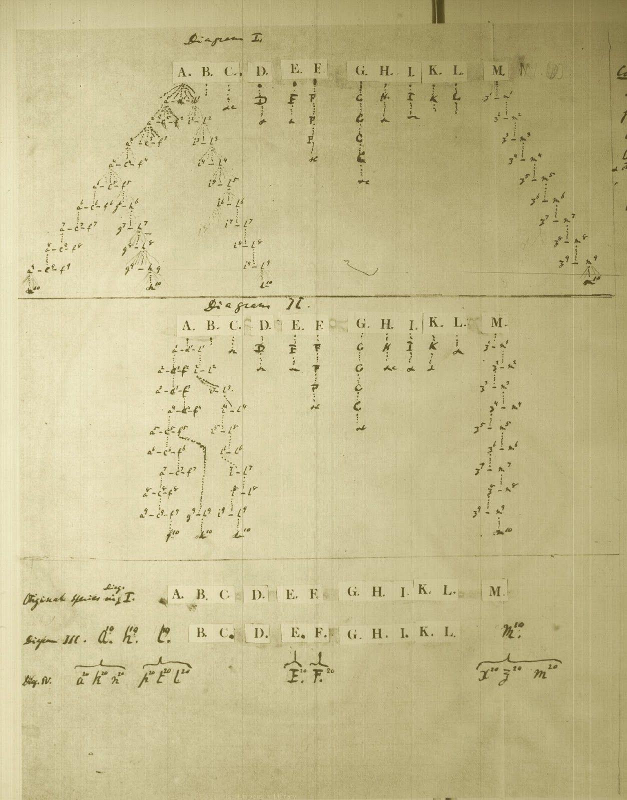 Arbre De L Evolution Des Especes Vivantes A Partir D Un Ancetre Commun Arbre Phylogenetique Croquis De Darwi Arbre Phylogenetique Cahier Arbre Genealogique