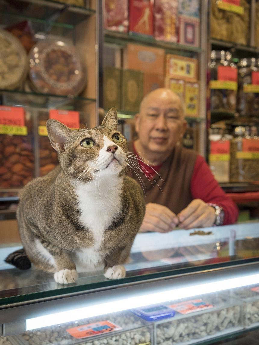 ?Shop Cats?: tutti i gatti delle botteghe tradizionali di Hong Kong che fanno le fusa e aiutano alla cassa. by Marcel Heijnen
