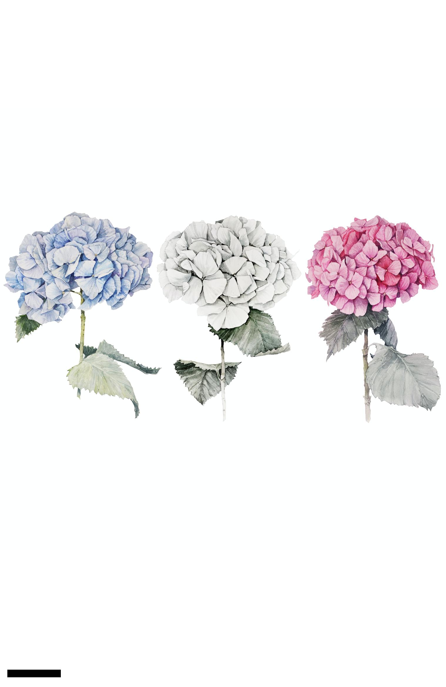 Обои гортензия, цветы, комната. Цветы foto 4