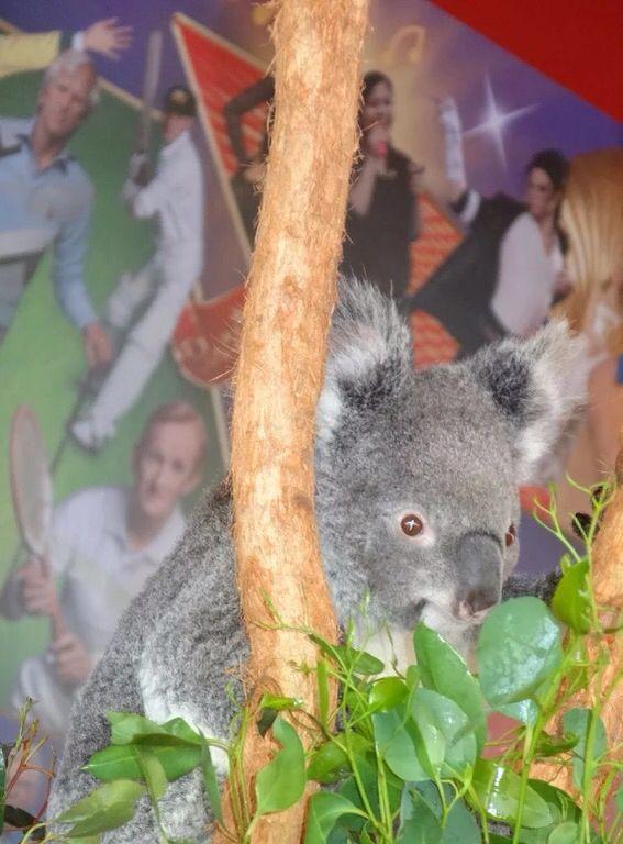 Sydney Wildlife Zoo, Australia