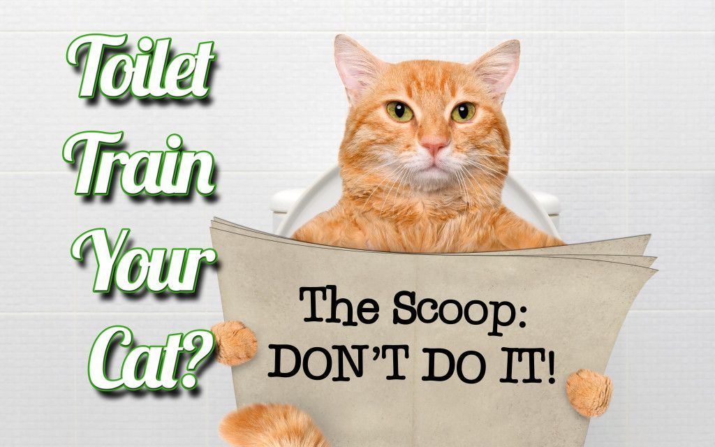 how to train a cat not to bite or scratch