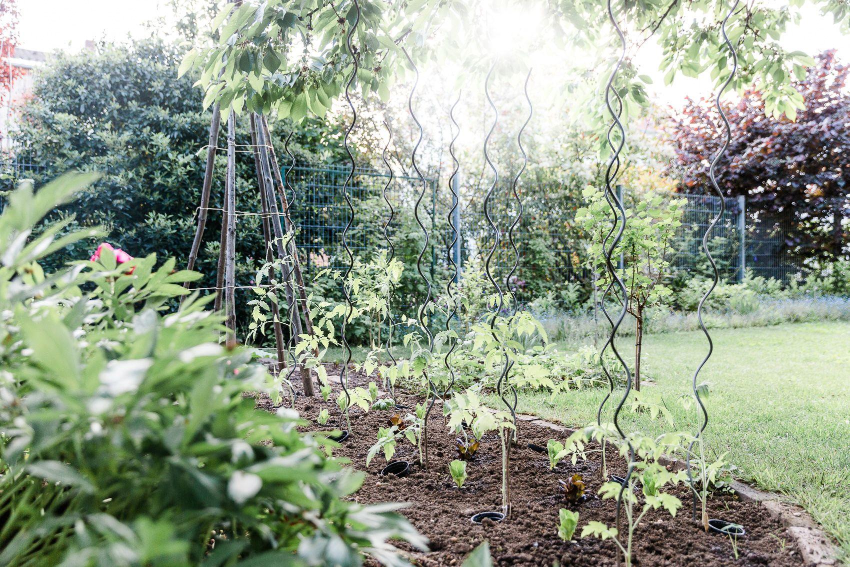 Tomatenliebelei – Von der Aussaat bis zur Ernte. Teil 4: Tomaten auspflanzen