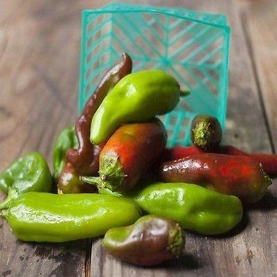 50+ Chili Pepper Big Jim Vegetable Seeds , Under The Sun Seeds