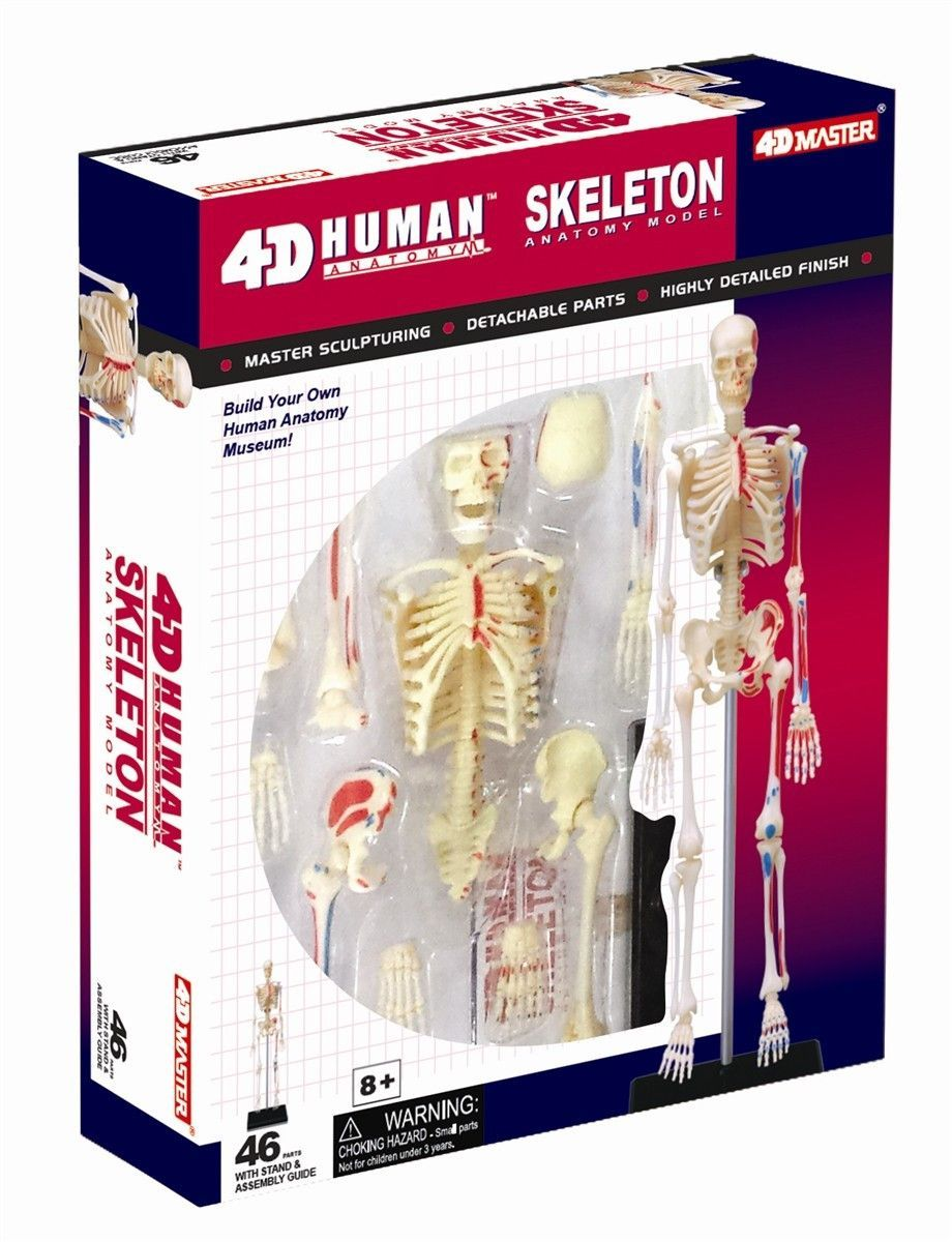 Famous Anatomy Science Fair Projects Ornament - Anatomy Ideas ...