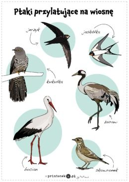 Ptaki przylatujące na wiosnę - plakat - Printoteka.pl | Montessori projects, Preschool writing, Nature lessons
