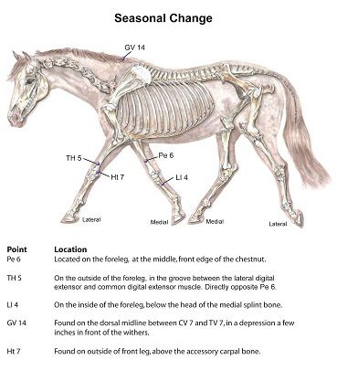 Acupressure for Weather Changes | cheval | Pinterest