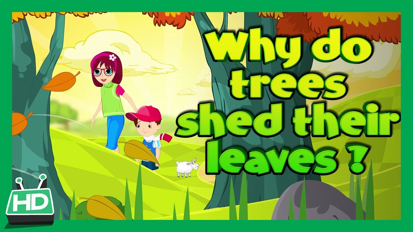 Why Do Trees Shed Their Leaves In Autumn Season
