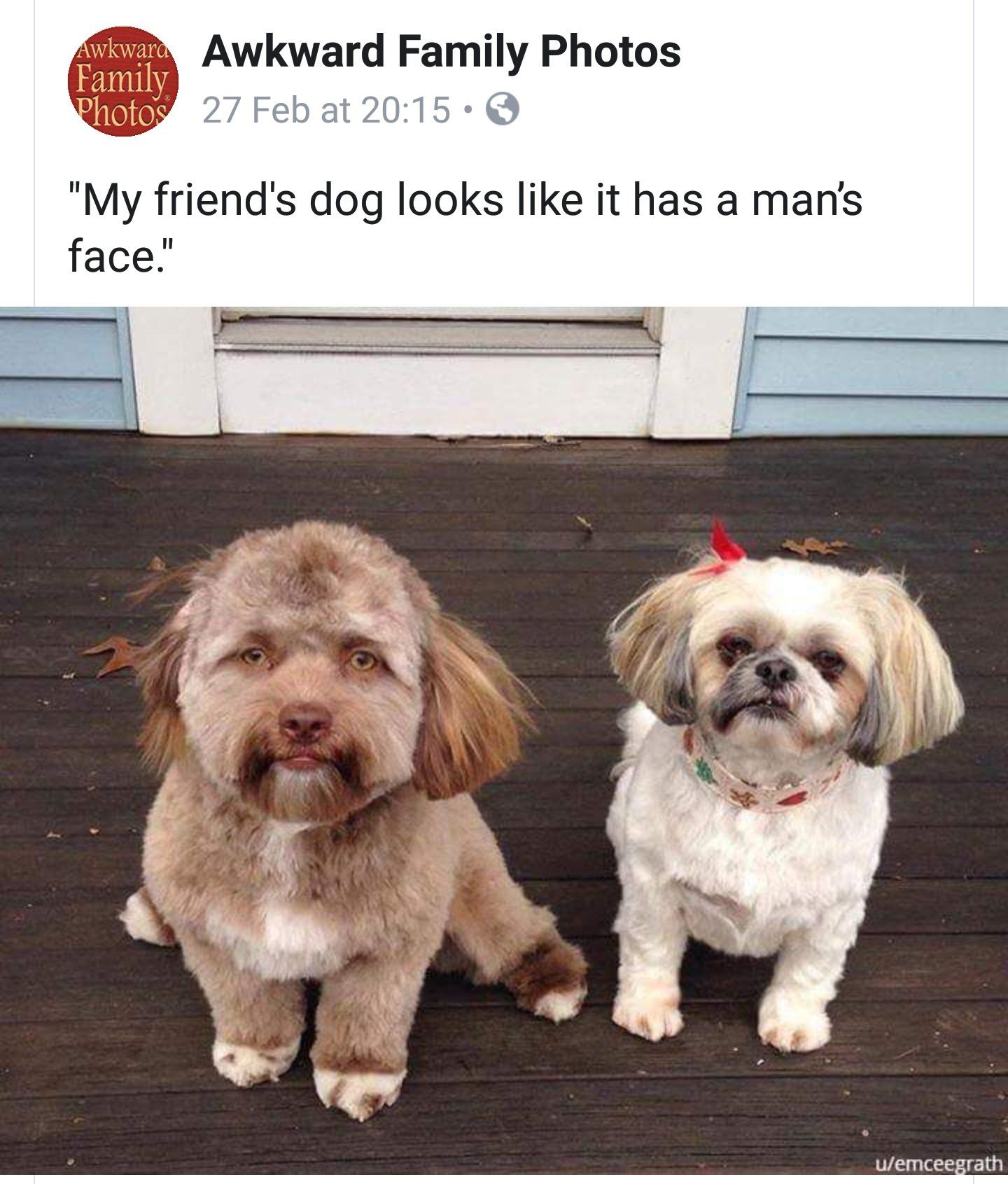 I Thought This Was Some Sort Of Face Swap Funny Animal Pictures Cute Animals Animals