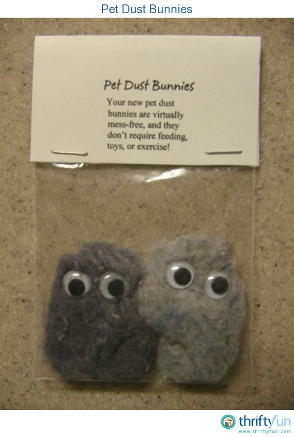 Pet Dust Bunnies Kindergarten Practice Gag Gifts