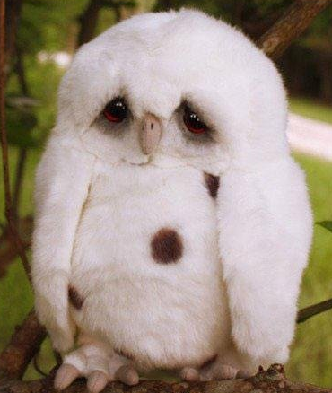 what a cute, sad little owl | Animals | Pinterest | Owl ...