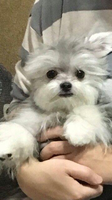 Pretty W おしゃれまとめの人気アイデア Pinterest Tami Justice 子犬 かわいい 子犬 犬