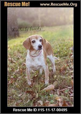 Basset And Beagle Rescue Of The Heartland Omaha Ne Rescue