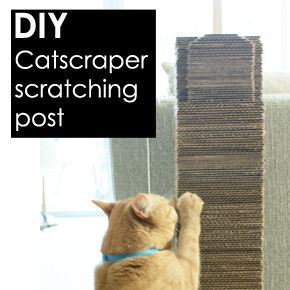 Homemade cat scratching post recipes to try this week for Homemade cat post