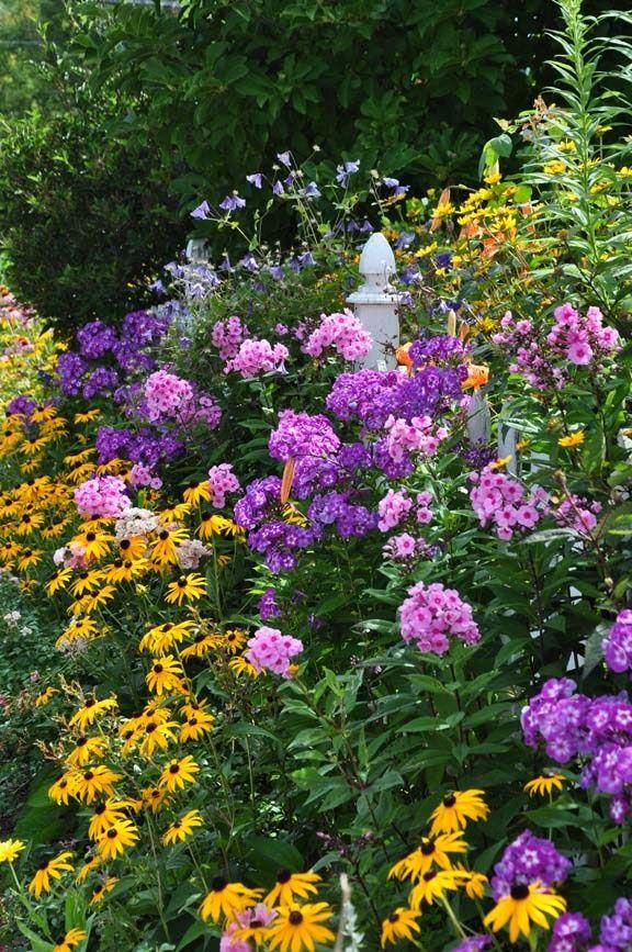 des vivaces enjolivent le jardin en cette fin d 39 t plantes et jardins pinterest vivace. Black Bedroom Furniture Sets. Home Design Ideas