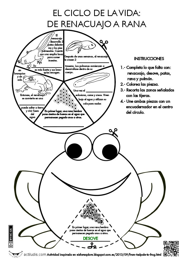 Ciclo de la rana   1 ESO   Pinterest   La rana, Ranas y Ciencia