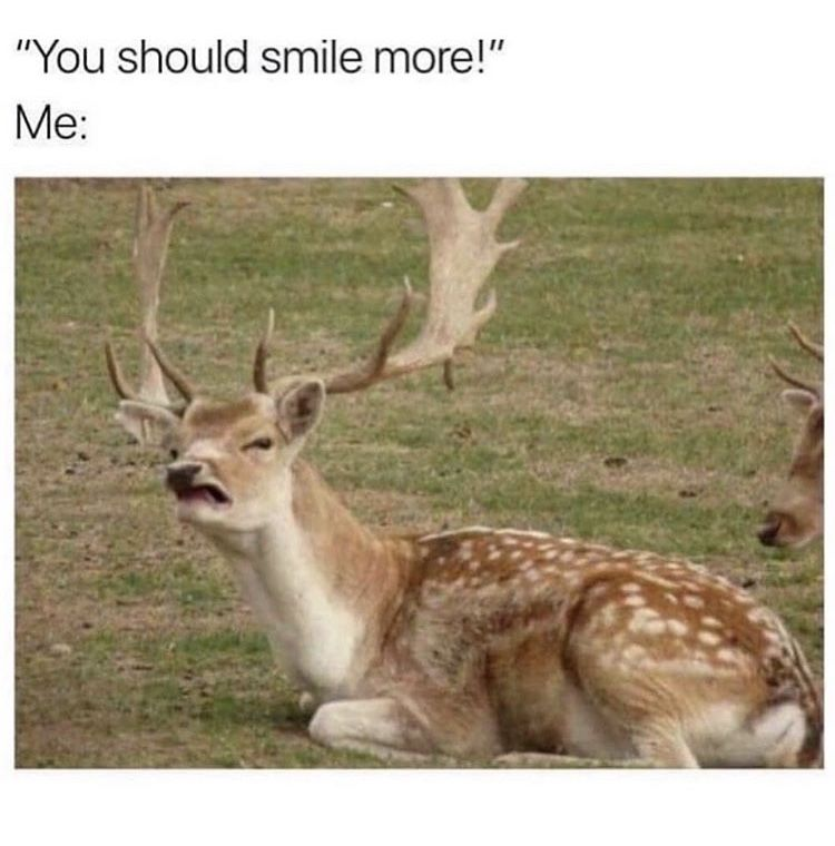 Huh Smile Funny Animal Memes Funny Deer Memes Of The Day