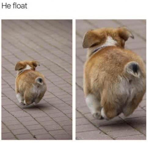 Funny Random Meme Dump Funny animal memes, Animal jokes