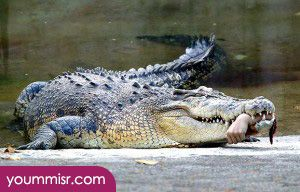 Photos most dangerous animals in Canada 2015 2016 Best website most dangerous animals in the world Canada Africa Australia 2014 http://www.yoummisr.com/photos-dangerous-animals-canada-2014-dangerous-snake/