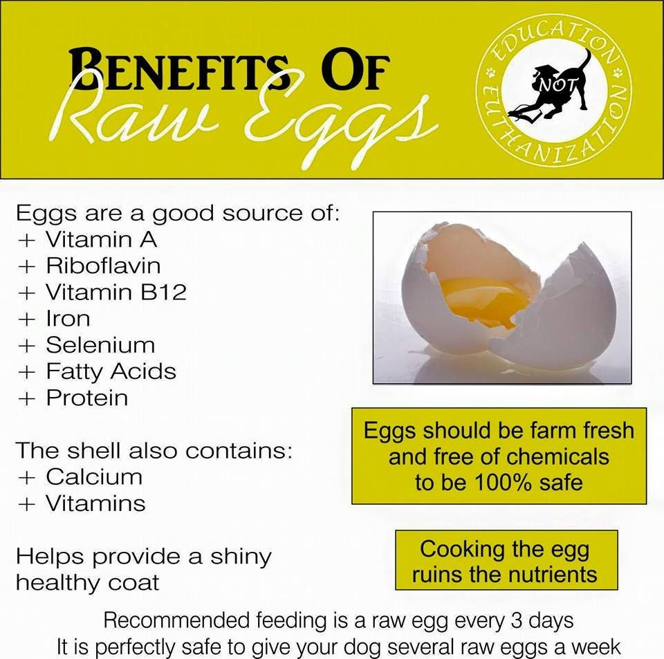 Benefits of Raw Eggs for Dogs Raw feeding for dogs, Eggs