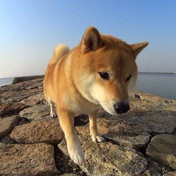 .@Shinjiro Ono | G'mornin! Click URL in the profile page has released a new video おはよ〜この...
