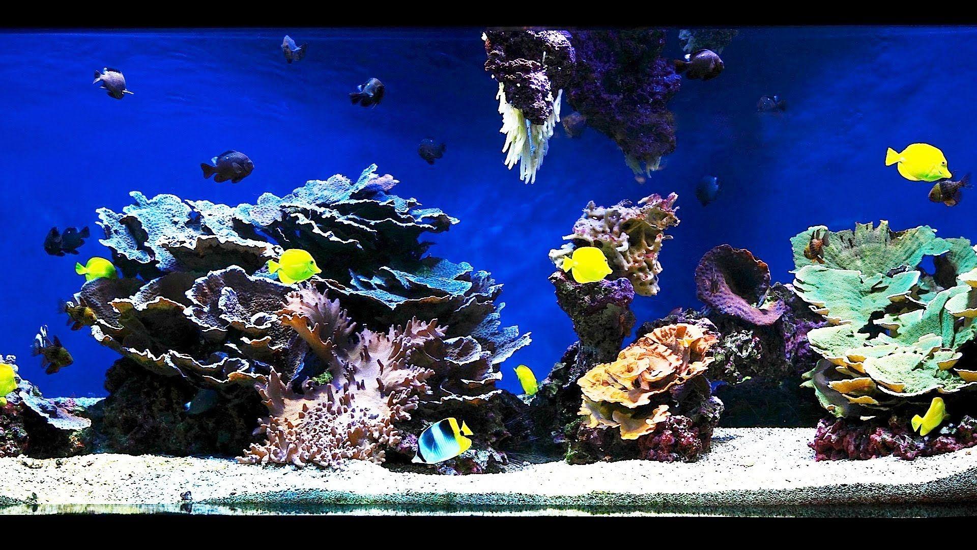 Can An Aqua Marine Look Like Glass