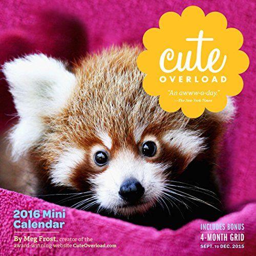 Cute Overload Mini Wall Calendar 2016 Meg Frost 9780761183402 Amazon Com Books Mini Calendars Wall Calendar Cute