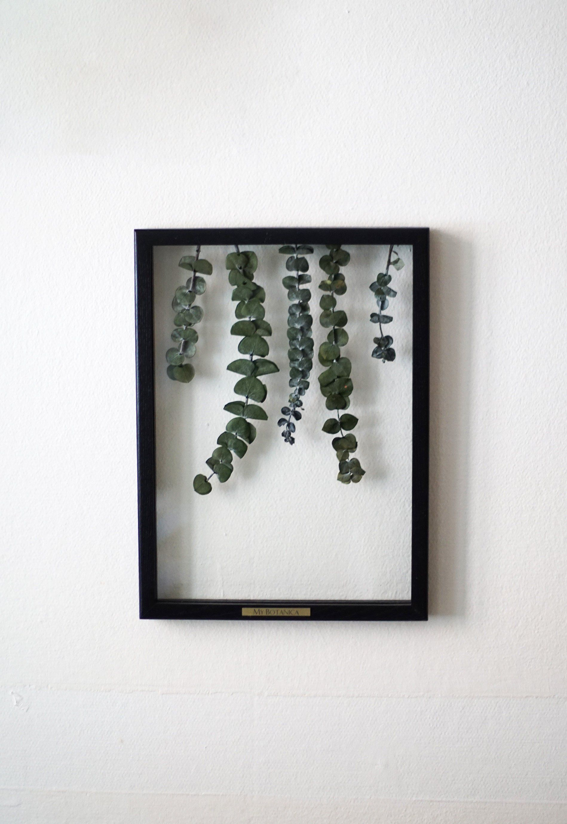 Framed Baby Blue Eucalyptus Leaves, Preserved Plant Art by MyBotanica -   16 planting Art leaves ideas